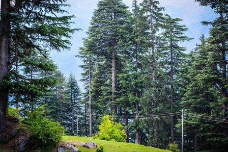 वन विहार  मनाली van vihar manali